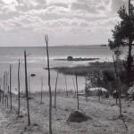 31. Drags fiskeläge 1955
