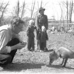 25. Stjärndal med sin tama räv ca 1949