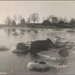 27. En bit av Lotsgårdens strand ca 1955