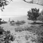 27. Vita Sand 1948