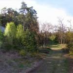 1g. Skogsvägen förbi Alkullaberget 2008