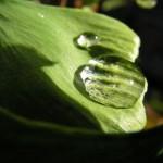 Vattendroppar