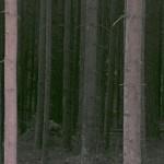 Dunkel skog
