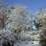 Överraskande snö