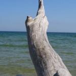 Sten på gren vid Österlen.