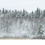 Nypudrad skog.